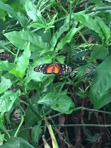 One of the many butterflies we saw.  They were hard to get pictures of since they were almost constantly in motion!