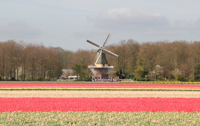 This windmill is actually at the back of Keukenhof Gardens.