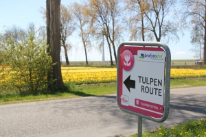 This way to the tulips!