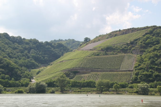 Some of the many, many vineyards we saw along the way.