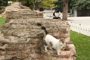 Cats and ancient ruins
